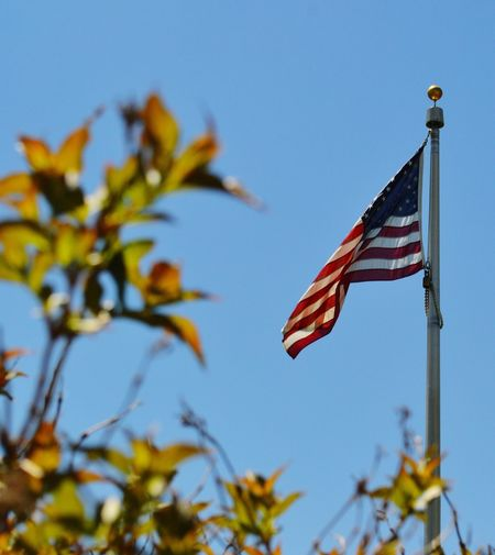 American Flag through Leaves Outdoors Springtime Nature_collection Tree Nature Photography EyeEm Best Shots EyeEm Nature Lover Eye4photography  Plant Growth Scenics Stars And Stripes Clear Sky Patriotism Flag Cultures Blue Sky Close-up Flag Pole American Flag Identity Fluttering National Icon Symbolism High Section Branch National Flag Growing Flower Tree