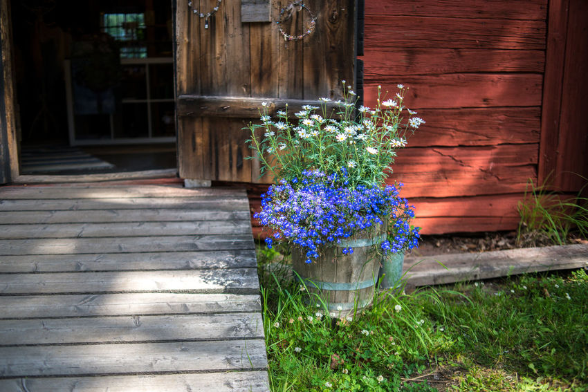 Strömforsin Ruukki Rural Architecture Beauty In Nature Blooming Building Exterior Built Structure Countryside Day Flower Flowers Freshness Front Or Back Yard Grass Growth Nature No People Outdoors Plant Village Village Life Wood - Material Wooden House