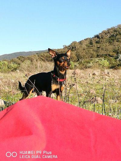 Frenk Piccolodobby Beautifuldog