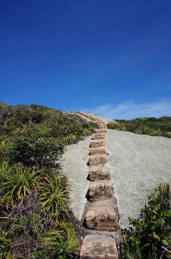 Ilha do Papagaio. Nature EndlessPath The Way Forward