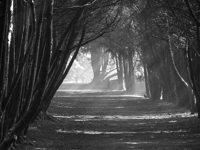 Black and White Beauty In Nature Bnw_friday_eyeemchallenge B&w_friday_eyeemchallenge Beauty In Nature EyeEm Best Shots EyeEm Selects Blackandwhite Autumn Tree Branch Tree Trunk Forest Sunlight Sky Landscape WoodLand