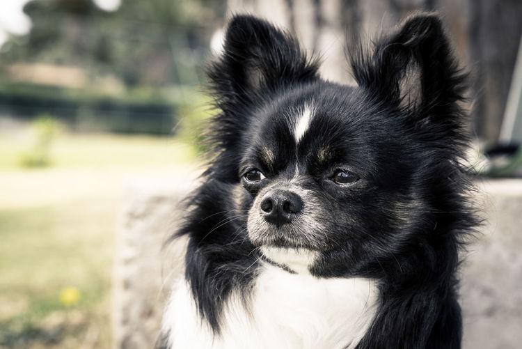 Portrait of black dog