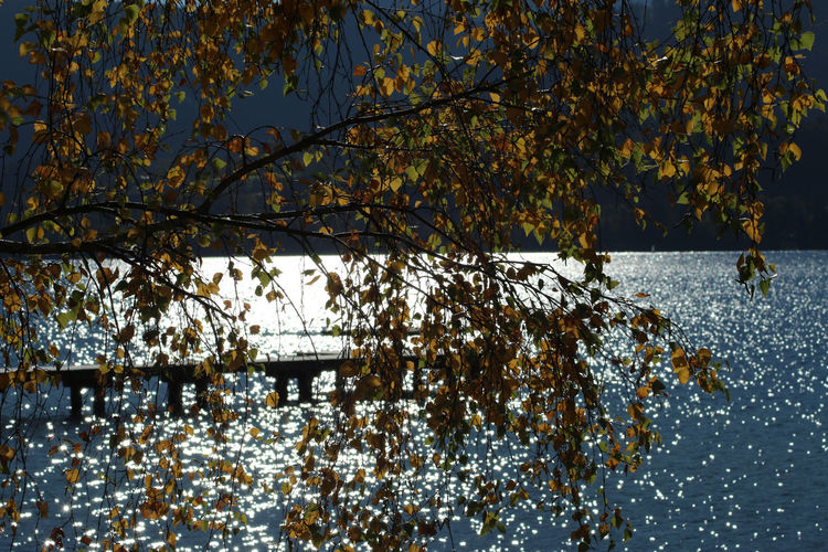 Tegernsee, Bad Wiessee Autumn Beauty In Nature Branch Clear Sky Close-up Day Flower Fragility Freshness Growth Leaf Nature No People Outdoors Scenics Sky Tree Water