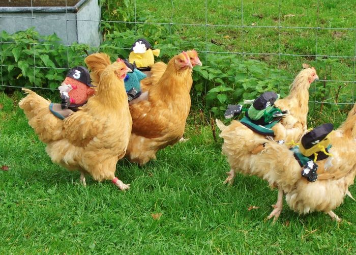 Animal Race Animal Themes Chicken Race Chicken Racing Chicken Run Chickens Chickens And Jockeys Hens Lewes Mini Jockeys Races Village Fete Spring Chickens Yeah Springtime! Cider Festival Apple Festival English Countryside Quirky Easter Ready Let's Go. Together. Mix Yourself A Good Time