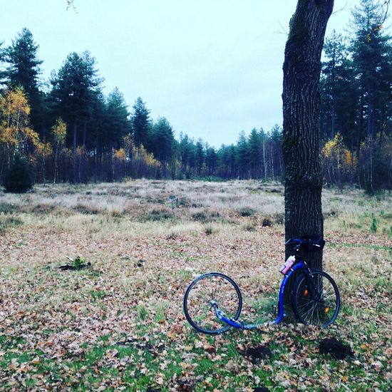 Relaxing Nature Kickbike Autumn Colors Autumn
