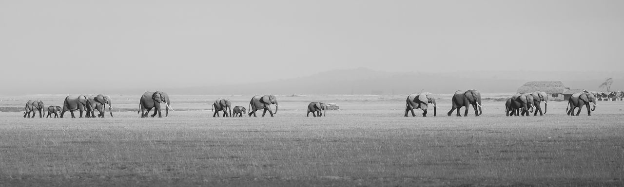 Panoramic view of elephants on landscape against sky