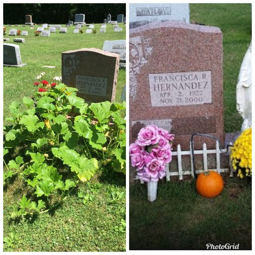 It started with a Halloween pumpkin and it became a graveside garden.