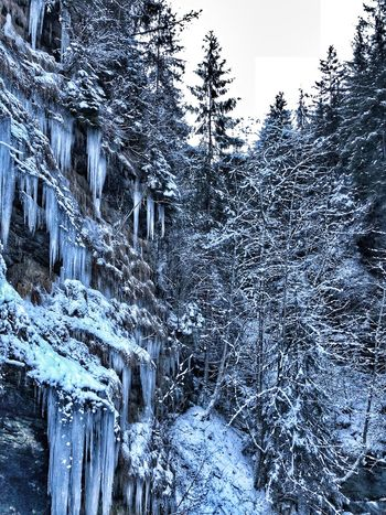 #snow #ice #trees #zillertal #dreams #beauty #iphonex #mountains Tree Snow Nature Winter Cold Temperature No People Forest Landscape Sky Beauty In Nature Mountain
