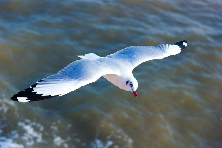 Close-Up Of Seagull Flying Over Water