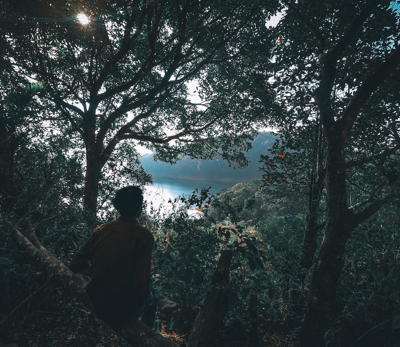REAR VIEW OF MAN STANDING AGAINST TREES IN FOREST
