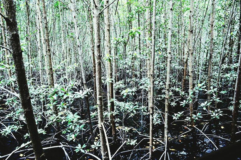 Mangrove Forest Mangrove Swamp Mangroves Travel Travel Photography Travel Philippines Palawan Philippines Palawan Palawanadventures Nature Nature Photography