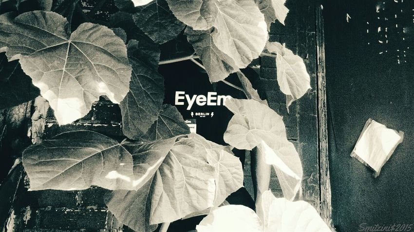 I was part of EEA3 Eea3 - Philadelphia The Moment - 2015 EyeEm Awards Streetphoto_bw The Global Eyeem Adventure - Philadelphia The Global EyeEm Adventure Eye4photography  From My Point Of View Taking Photos Urban Landscape