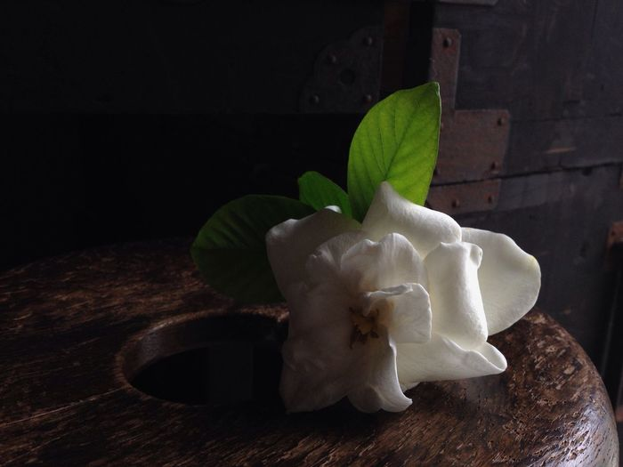 Yesterday, the return of Gardenia blossoms - TheMinimals (less Edit Juxt Photography) EyeEm Nature Lover Flower