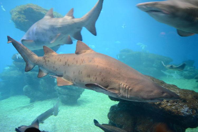 Shark in palma aquarium