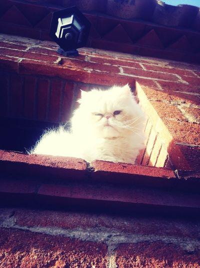 Cucú!! #Osiris #Gatos #Miau