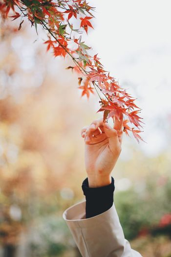 Close-up of person holding autumn leaves