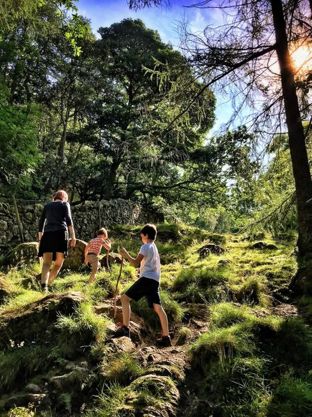 Walla Crag Derwent Water Landscape Keswick Trail Tree Trees Forest Hill Mountain Climbing Lake District Outdoors Summer Exploring Hiking Enjoying The Sights Nice Views Walking Nature On A Hike Tourism Derwentwater Family