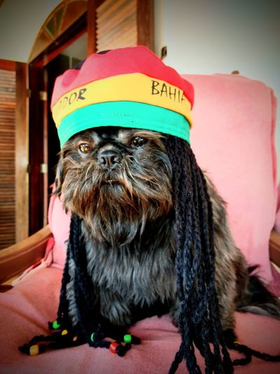 Dokey Marley Pet Portraits Eyeem Market Petlovers Pet Models EyeEm Selects Portrait Photography The Portraitist - 2018 EyeEm Awards Rastafaridog Shihtzulovers Shihtzumoments Pets Dog Pet Clothing Looking At Camera Portrait Humor Costume Dressing Up Carnival - Celebration Event