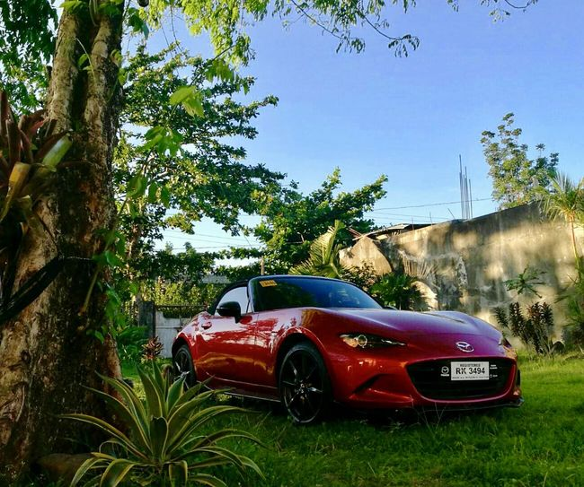 Car Gorgeousmiata Shinycar Soulredingreen