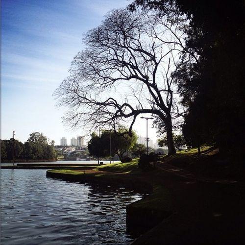 Iphonephoto Photo Photography Analogic Hipstamatic Hipstamaticphoto Afternoon Lens Film Tree Sunset Sun