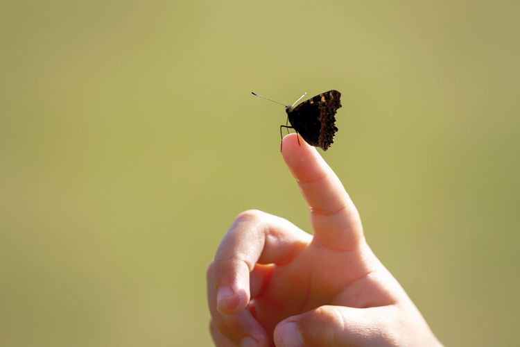 Cropped image of hand holding small insect
