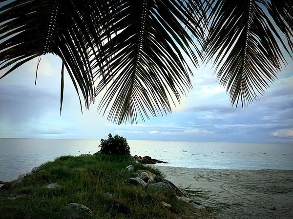 EyeEmNewHere Sea Palm Tree Horizon Over Water Nature Water Tranquility Beauty In Nature Scenics Tree Tranquil Scene Beach Sky No People Growth Outdoors Day JeanneRotaMatthews EyeEmCaribbean EyeEm Best Shots Travel Destinations Tranquility Sand Eyeembeachlover