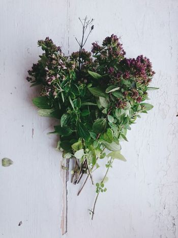 Brought home some Oregano from the Countryside Sherwoodskogen Sherwood Forest Food Cookingpizza Pizzatime