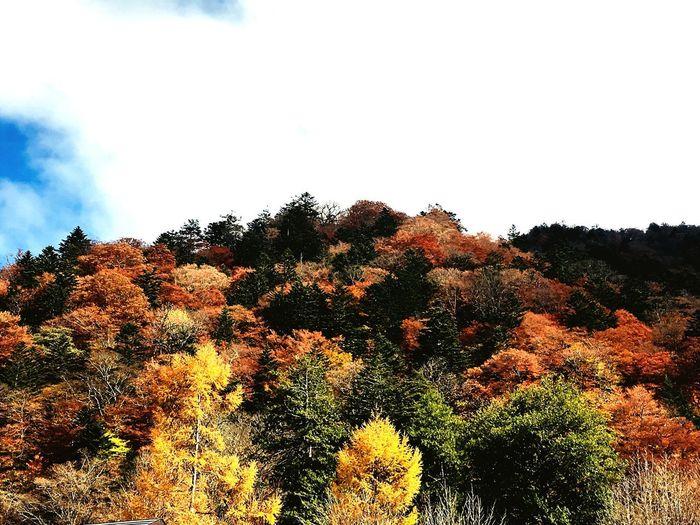 雲 彩 カラフル 日光 絶景 中禅寺湖 青空 湖 男体山 紅葉 山 自然 Sky Plant Tree Growth Nature Beauty In Nature No People Tranquility Day Outdoors Tranquil Scene Cloud - Sky EyeEmNewHere EyeEmNewHere