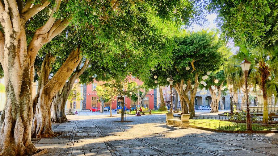 City square in La Laguna, Tenerife Norte Tree City Park Sunlight Park - Man Made Space Treelined