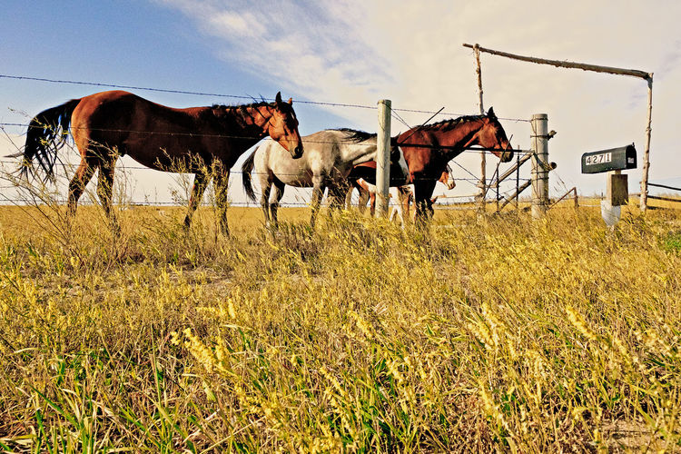 Horses on grass against sky