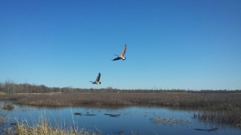 Mid-air Lake Skill  Blue Flying Sky Men Motion People Adult Stunt Water Clear Sky Outdoors One Person Nature Day Sportsman Adults Only One Man Only Bustards Forest Flock Of Birds Cold Temperature Low Angle View