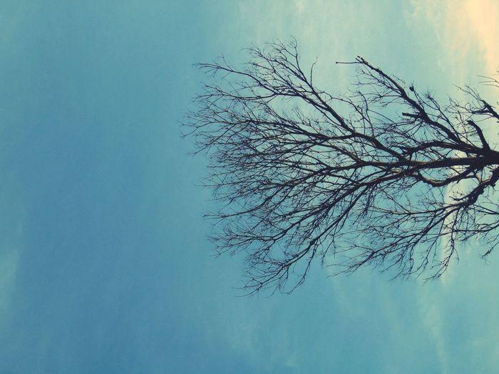 twigs dry Sky