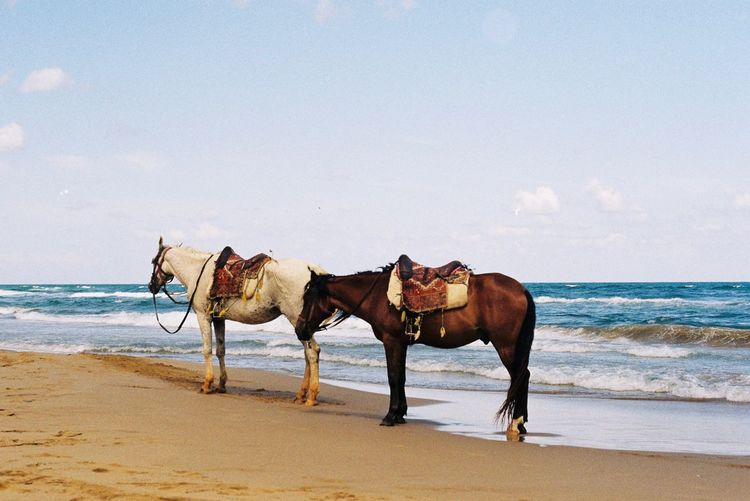 Horse On Beach Filmisnotdead Analogue Photography Film Photography 35mm Film Land Beach Water Sea Domestic Animals Mammal Animal Animal Themes Sky Horse Horizon Over Water Nature Sand