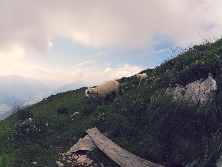 Mountain Nature Travel Destinations Grass Outdoors Fog Beauty In Nature Landscape No People Healthy Lifestyle Slovenia Alps Adventure Sheeps Krn