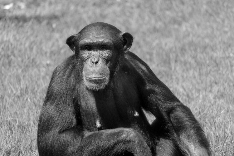 Portrait of monkey sitting on land