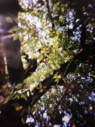 sunlight Gakkenflex Twin Lens Reflex Filmcamera Japan Tree Sunlight