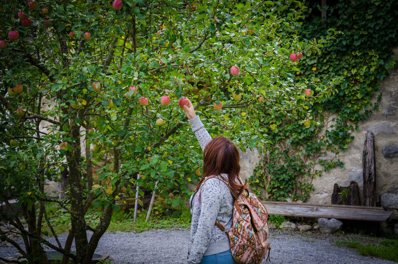 Woman Plucking Apple From Tree Outdoors