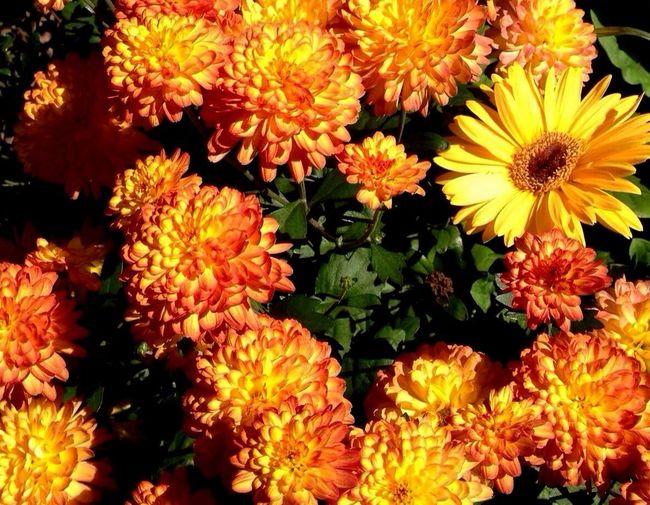 Full frame of yellow flower