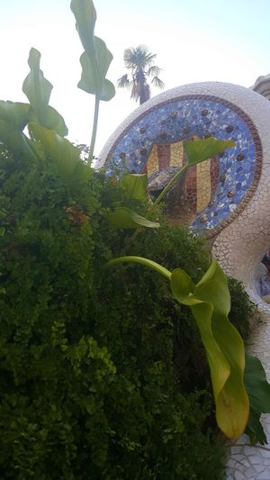 Architecture Color Tiles Colorful Day Green Color Growth Nature No People Outdoors Plant Tiles Architecture Tiles Textures