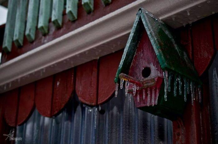 Frozen birdhouse Ontario EyeEm Best Shots Architecture Cold Days