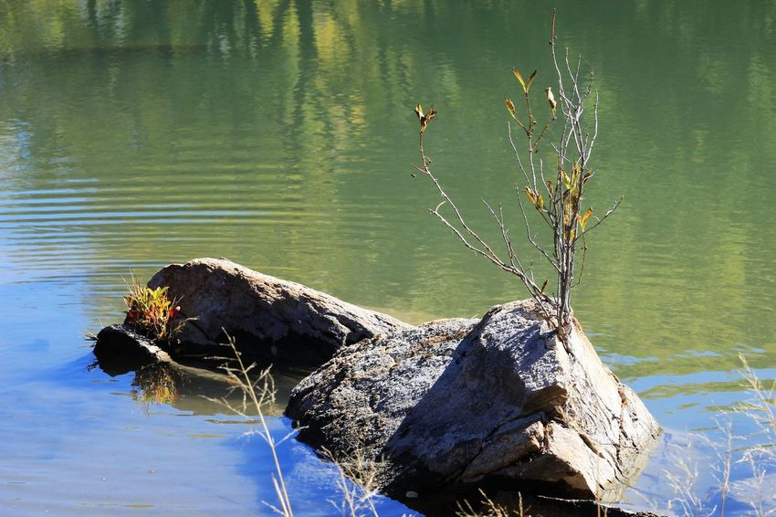 Water Lake Nature Animal One Animal Animal Wildlife Animal Themes Animals In The Wild Day No People Bird Vertebrate Plant Reflection Tree Tranquility Waterfront Outdoors Rock Driftwood Dead Plant