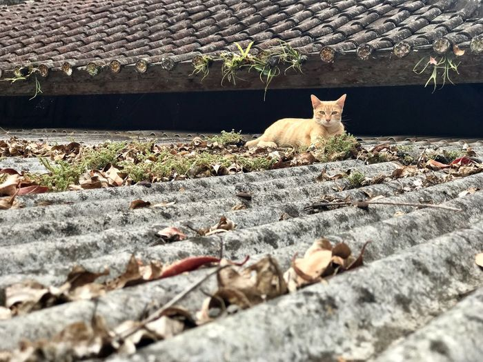 Domestic Cat Pets Feline Cat Animal Themes Domestic Animals Mammal One Animal No People Outdoors Day Sitting Nature Portrait Bali