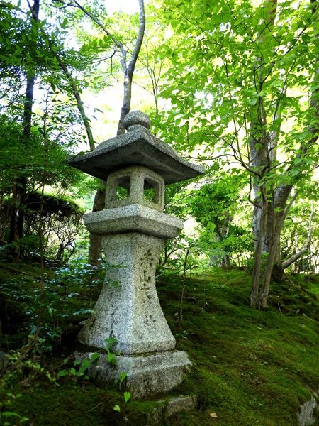 Green Color Japan Japanese Garden Lush Foliage Monochrome No People Stone Lantern Tranquil Scene Travel Destinations Trees