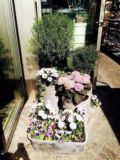 Garden Photography Pot Plant Summer