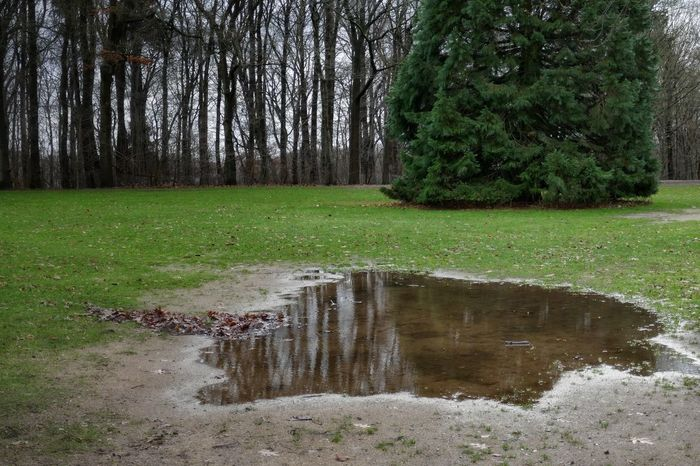Puddleography Tree Nature Water Green Color Beauty In Nature No People Day Outdoors Grass Sky Tranquil Scene Dezember 2016 StillLifePhotography Taking Photos Authentic Moments Eyeemphotography From My Point Of View Close Up Photography EyeEm Nature Lover Nature Freshness Outside Photography