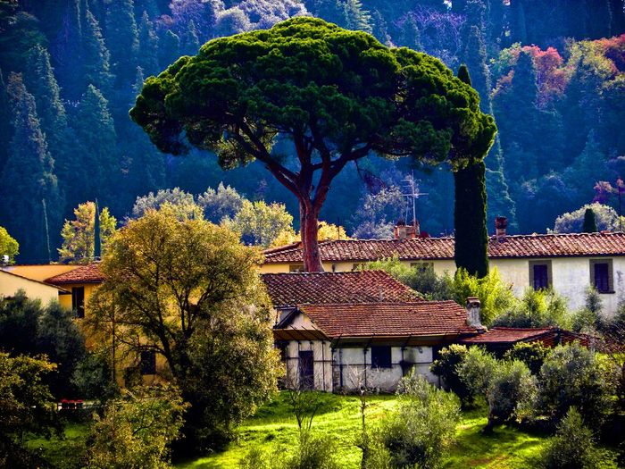 Beauty In Nature Florence Florence Italy Garden Photography Italy Nature Toskana Toskana,italy Tree