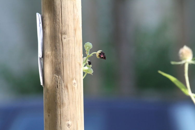 Close-up Day Growing Out Of A Pole Hiding Nature No People Outdoors Plant Pole Wood - Material Wooden Pole