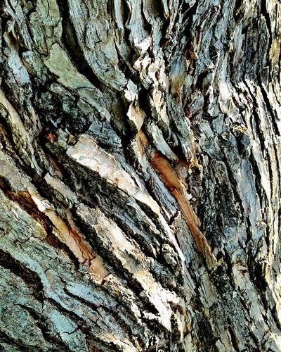 Textured  Abstract Pattern Backgrounds Close-up Day Tree Treebark Detailed Treebark Tree Bark Tree Bark Patterns Tree Bark Beauty