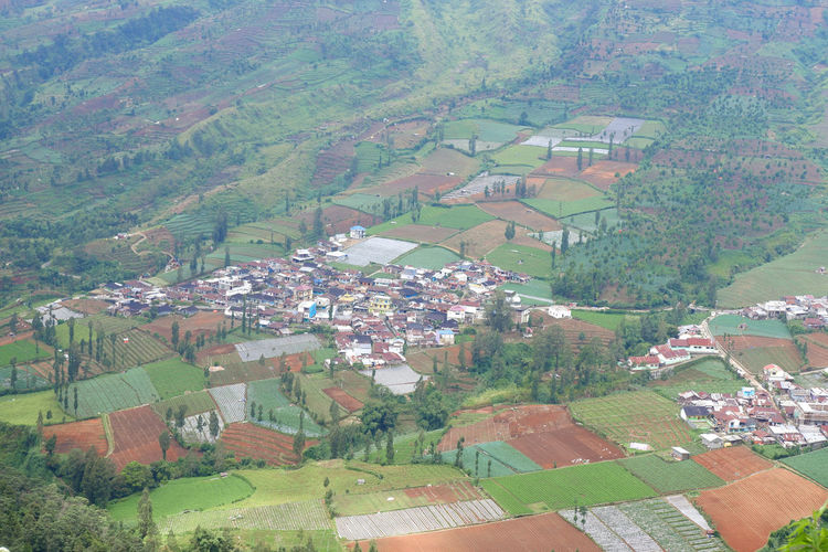 High angle view of trees and houses on field