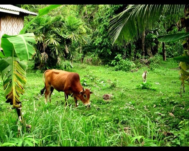 Relaxing Photo Koh Siboya Enjoying Weed  Coffee And Cigarettes Enjoying Life Green